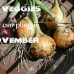Fall Vegetables: 25 Veggies You Can Plant in November
