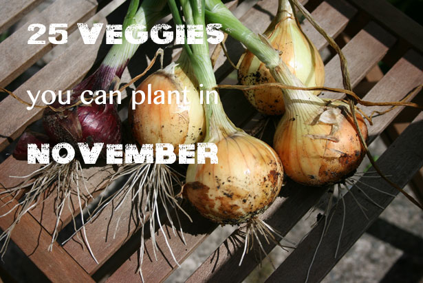 25 Veggies You Can Plant in November