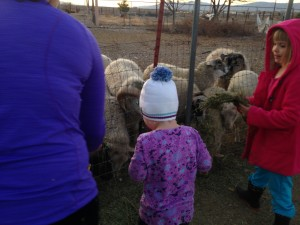 cold farm kids feeding sheep