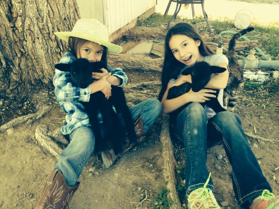 orphan lambs navajo churro
