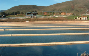 A photograph of the anaerobic lagoon at the Cal Poly, SLO Dairy.