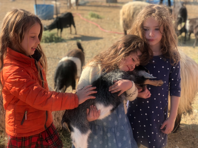 farm kids little girls holding baby goat