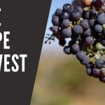 Destemming wine grapes