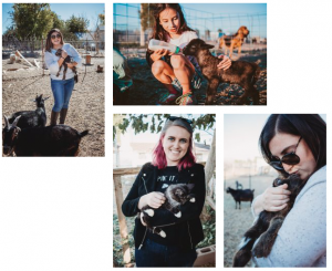 people cuddling with baby goats and baby kittens