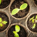 Why You Should be Starting from Seeds
