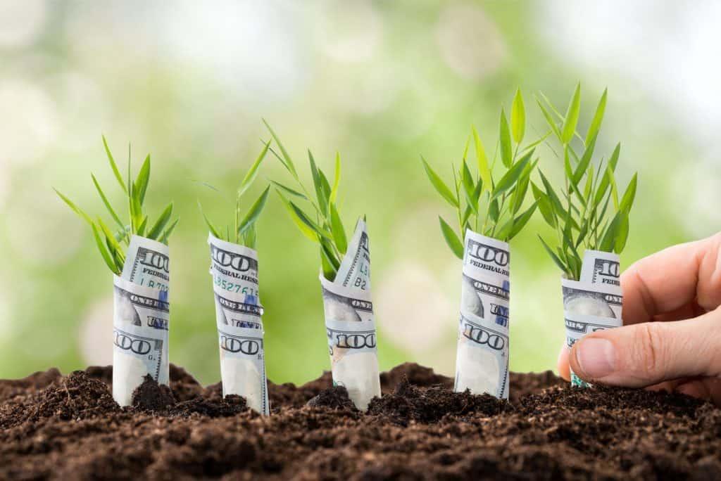 starting from seeds save money gardening