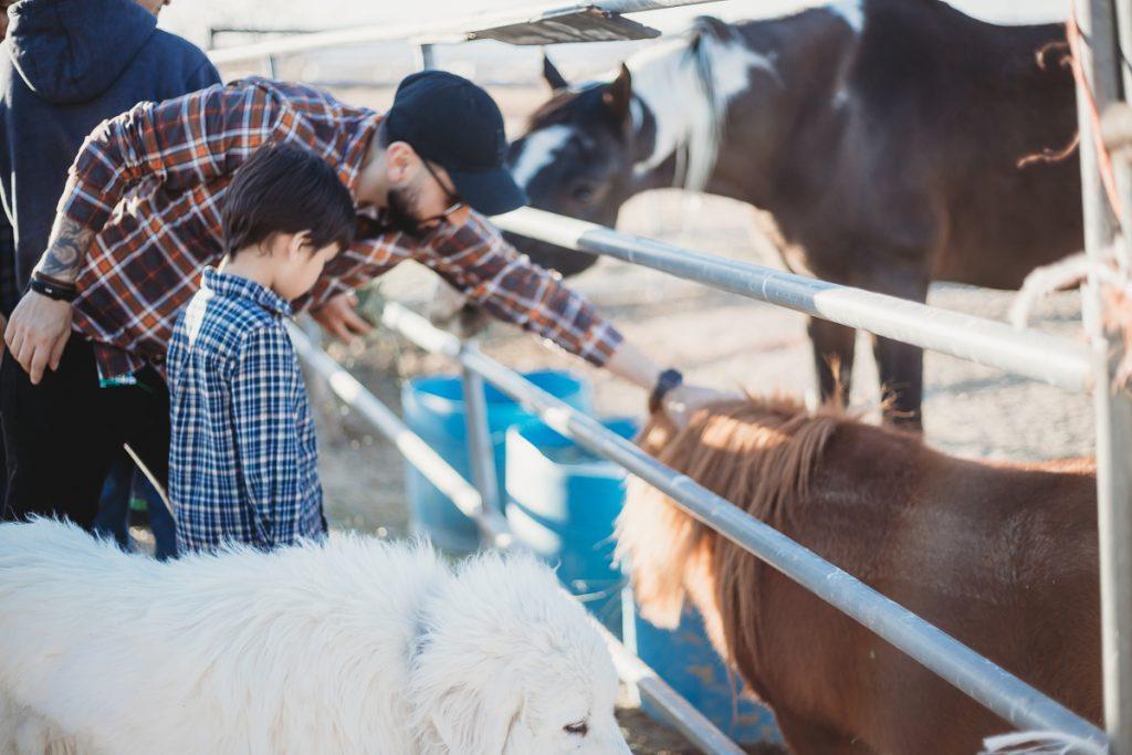 farm tour goat milking