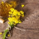 Is canola oil bad for you? Canola oil vs vegetable oil and animal fat