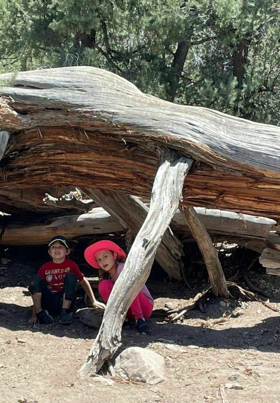 big bear lake woodland trail hikes in big bear