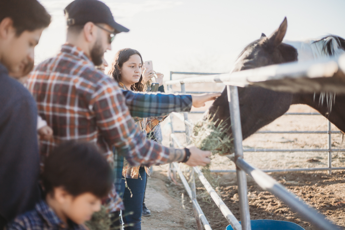 family visiting farm tour feeding horses