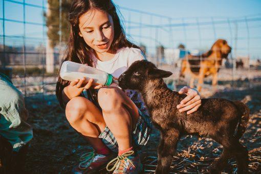 feeding a baby lamb southern California farm farmstead vacation rental airbnb