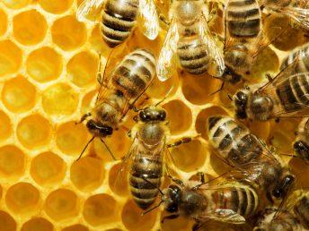 winterizing honey bee hive
