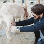 6 Things you Need for Goat Milking