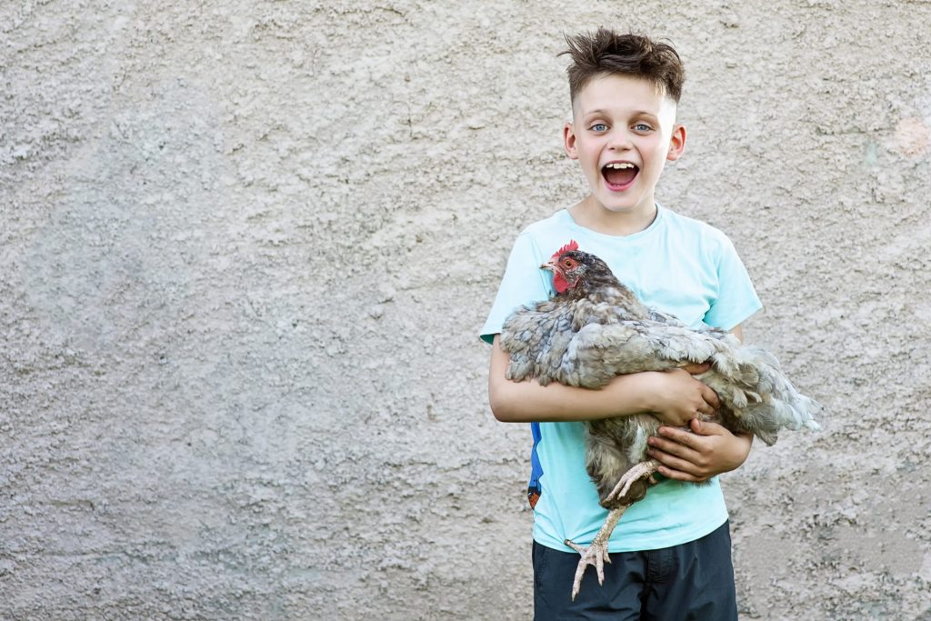 A happy boy in blue t-shirt holding chicken and laughing on blurred background