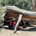 Hikes in Big Bear – 4 Best Trails for Your Family