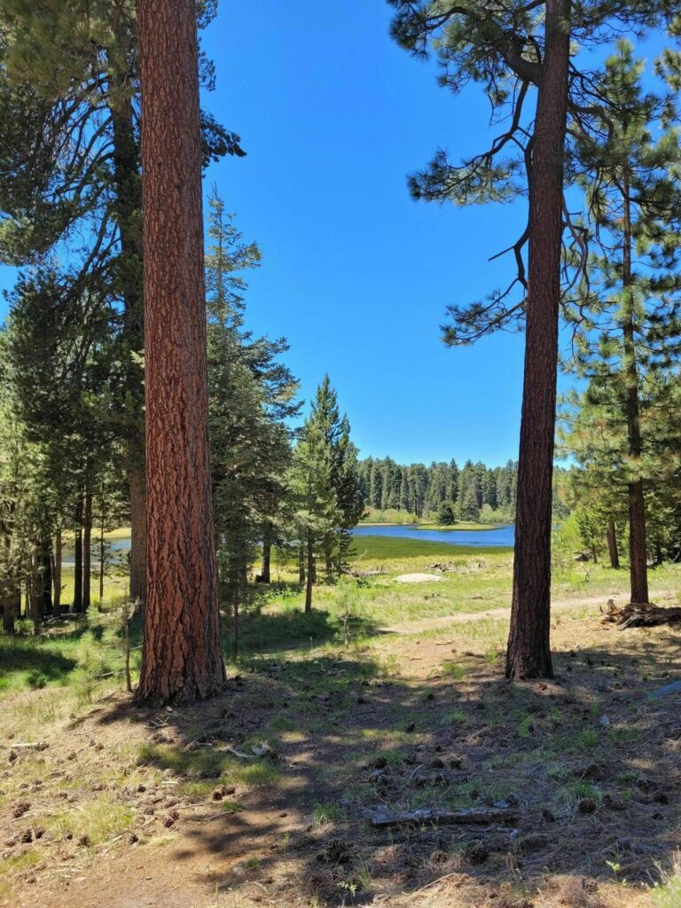champion lodgepole trail hikes in big bear